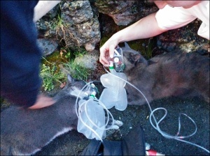 140327_cat_rescue_lg